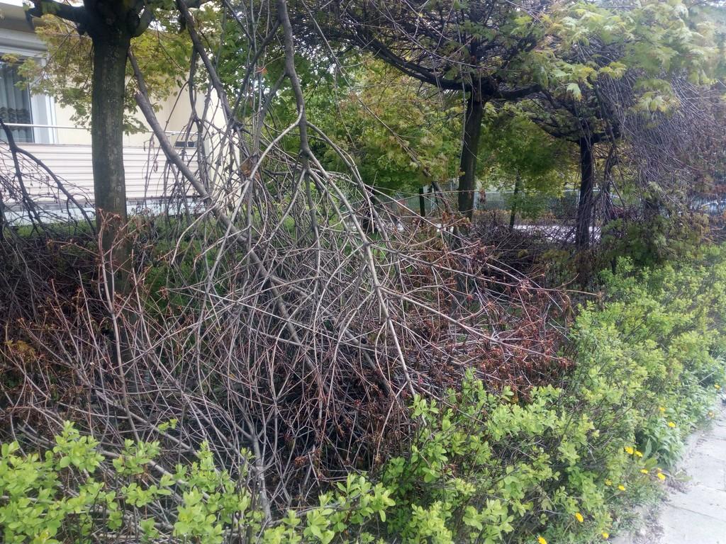 Połamane gałęzie